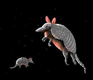 Armadillos in Space